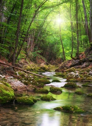 A wooded stream surrounded by green trees with the sunlight in between the branches.