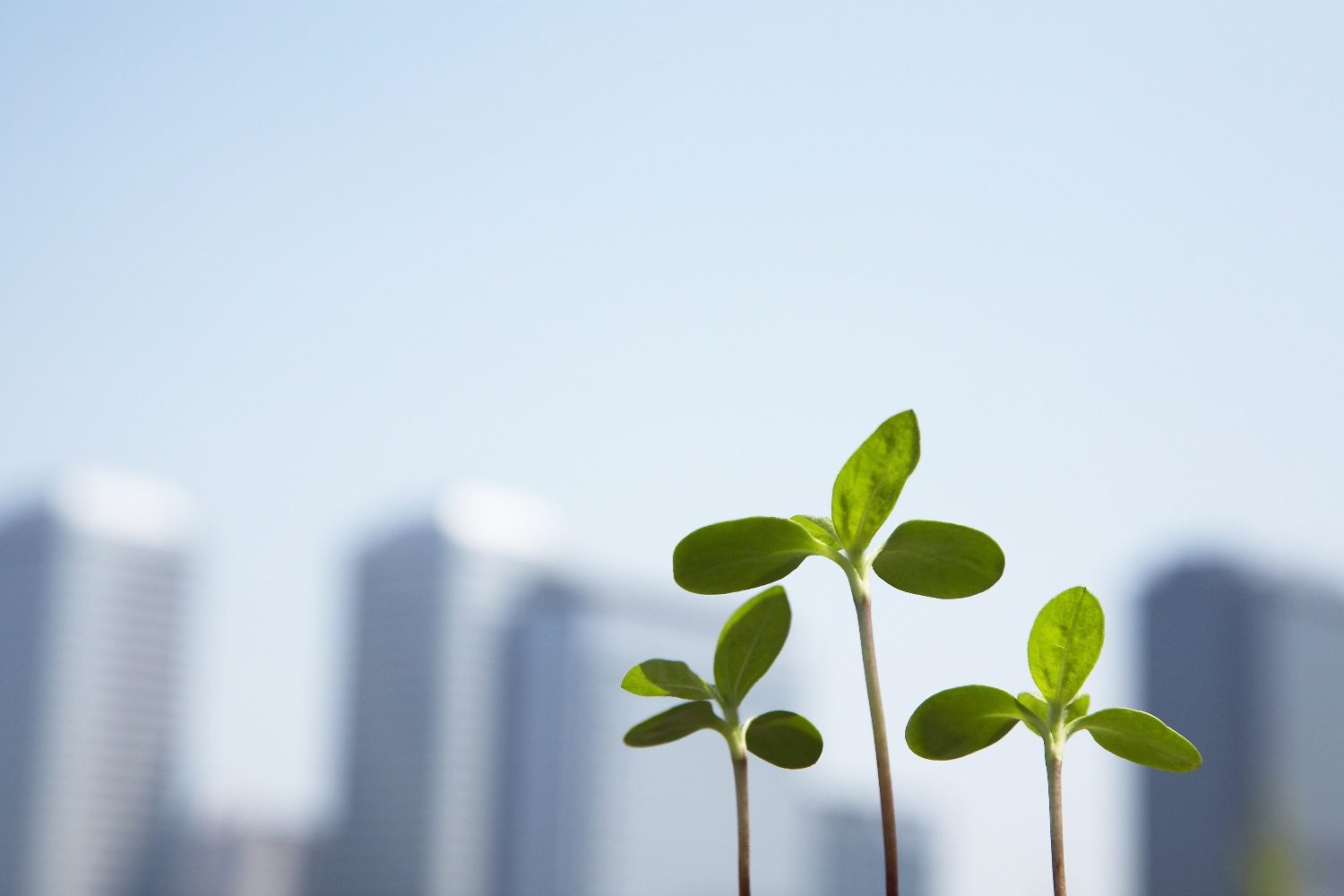 Business growth plants-1
