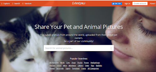 Cutest Paw home page_above the fold