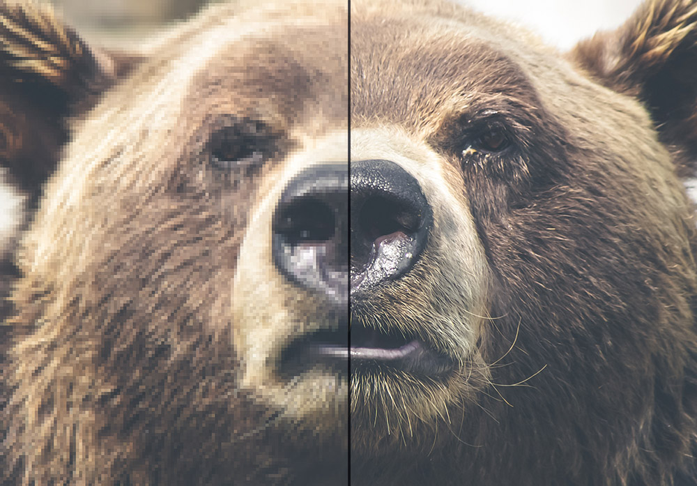 Photo of a bear simulating a side by side comparison of retina vs non-retina images.